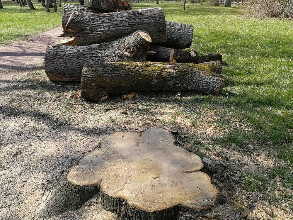 Baum-Schlosspark-Prinz-Chaos