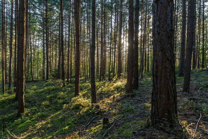 Waldbaden-Masserberg