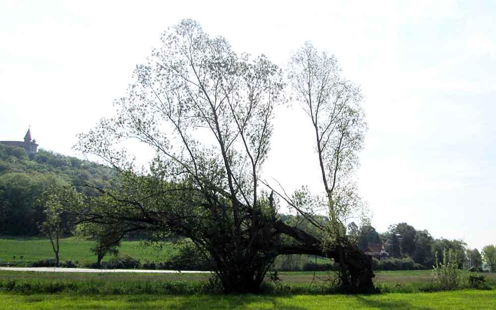 Weidenbaum-Heldburg-Lothar-Goetz