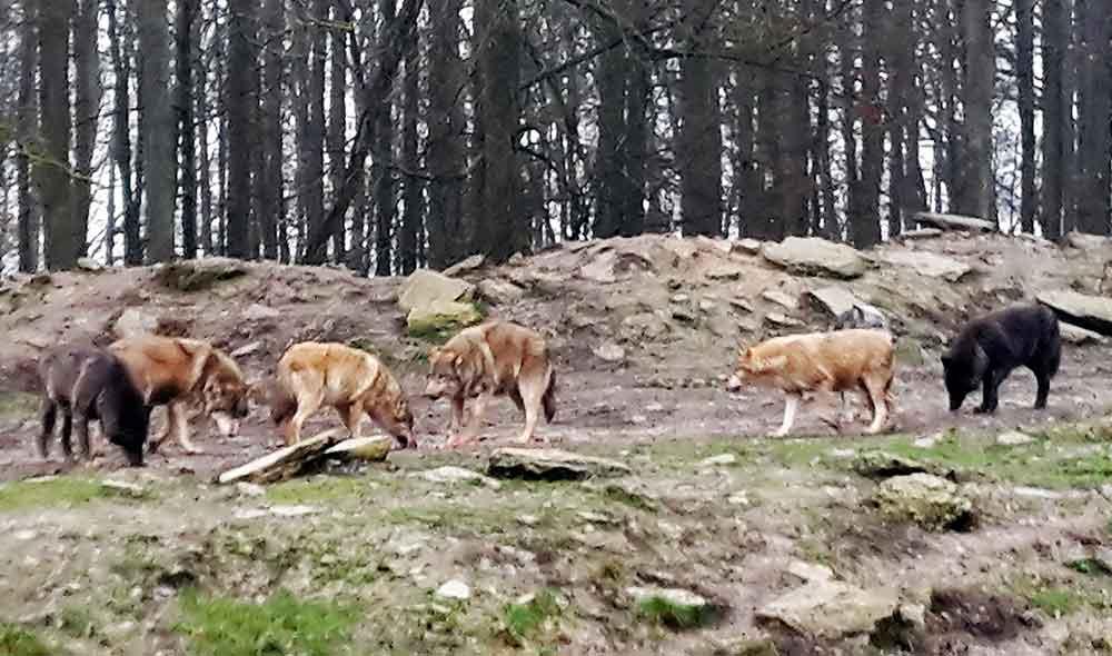 """""""Wolfsland Thüringen"""" erregt die Gemüter"""