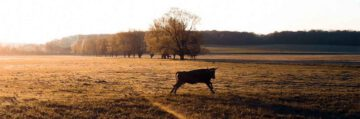 Hutelandschaft-Rodachaue-Film
