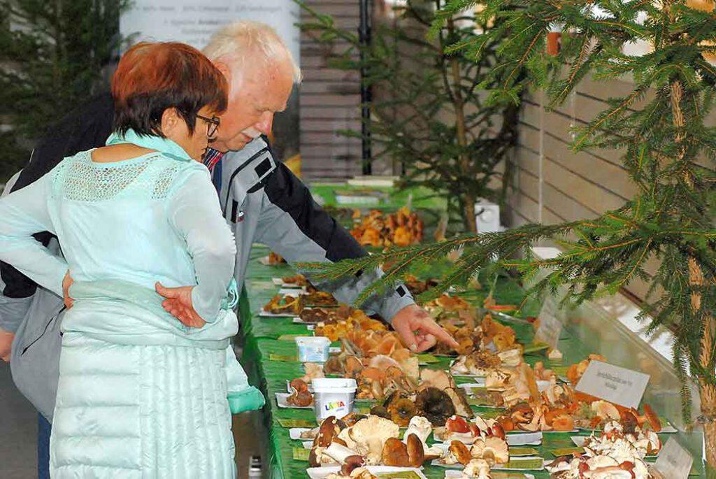 Pilzausstellung-Eisfeld-Grosse-Auswahl-an-heimischen-Pilzen