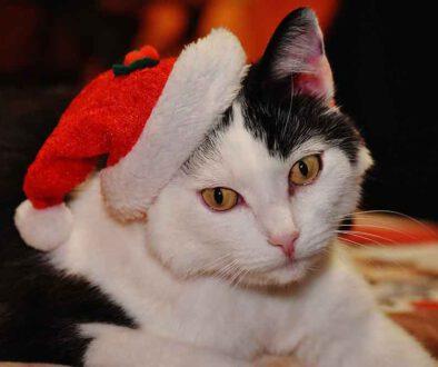 Weihnachtsgruss-Tierschutzverein