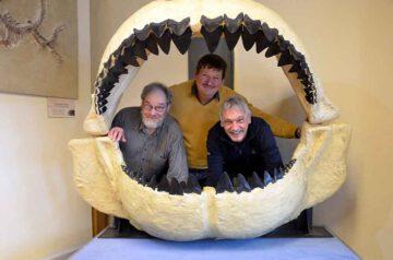 Riesenhai-Kiefer-wieder-in-der-Bertholdsburg