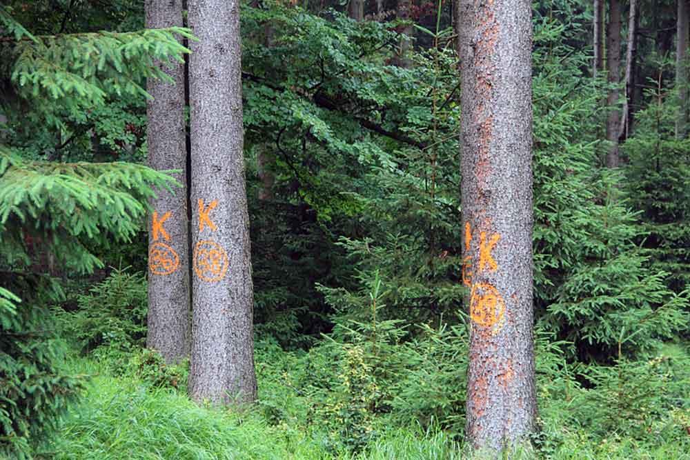 Sanierung von Borkenkäferschäden zwingt zu Umleitungen im Wald
