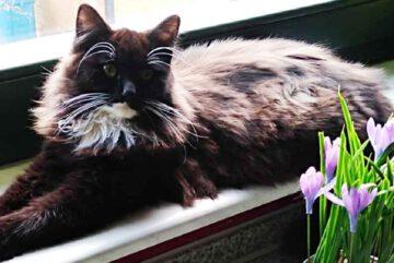Katze-Flauschi