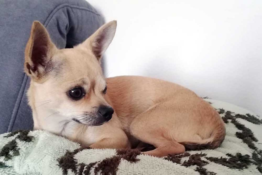 Auch ein kleiner Hund hat einen Schutzengel