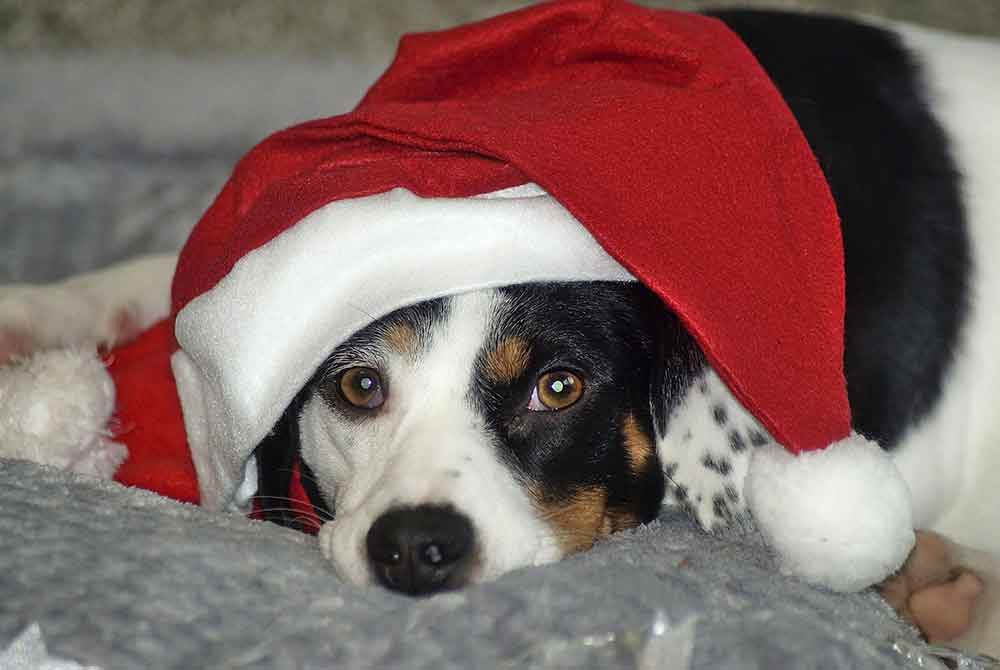 Nikolaus- und Weihnachtswünsche der in Obhut befindlichen Tiere des Tierschutzvereins Südthüringen