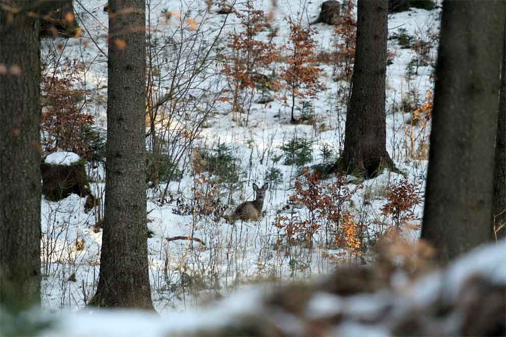 Ruhe im Winterwald