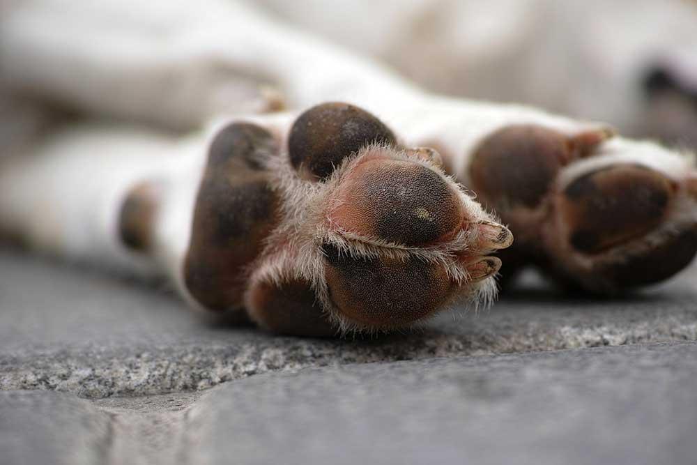 Wieder Giftköder in Schweickershausen ausgelegt – zwei Hunde tot