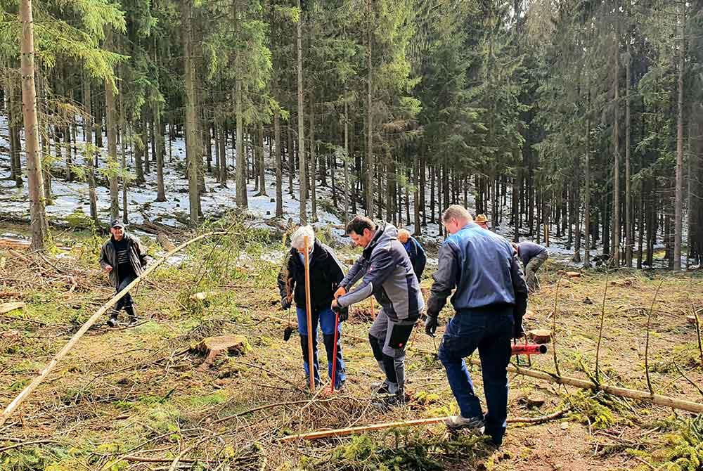 Bäume pflanzen im Teamwork