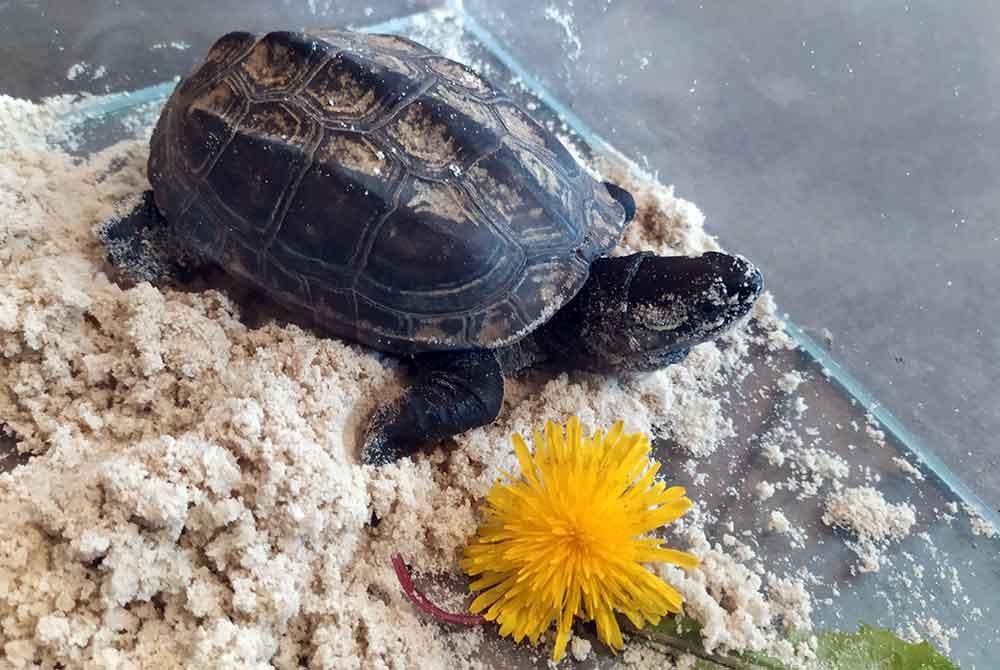 Schildkröte auf Abwegen