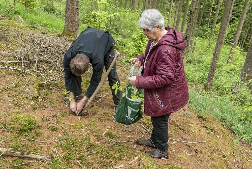 Heimatverein pflanzte 226 Bäume